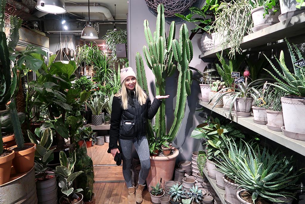 kaktus-inredning-stor